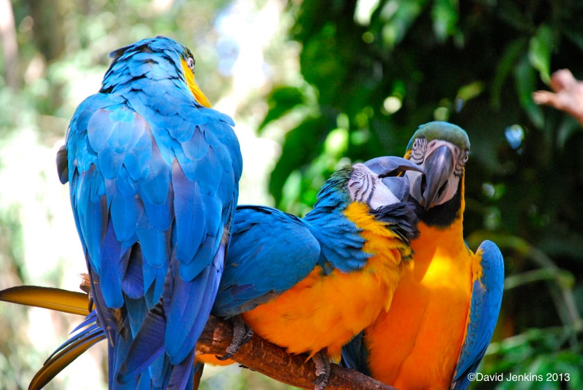 Loving Parrots at Parque das Aves