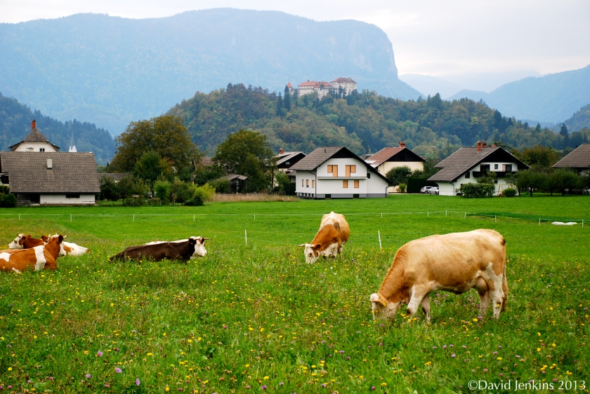 Bled Pasture